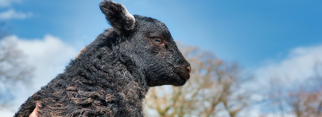The-Herdwick-Inn-Header-v9-1100x400